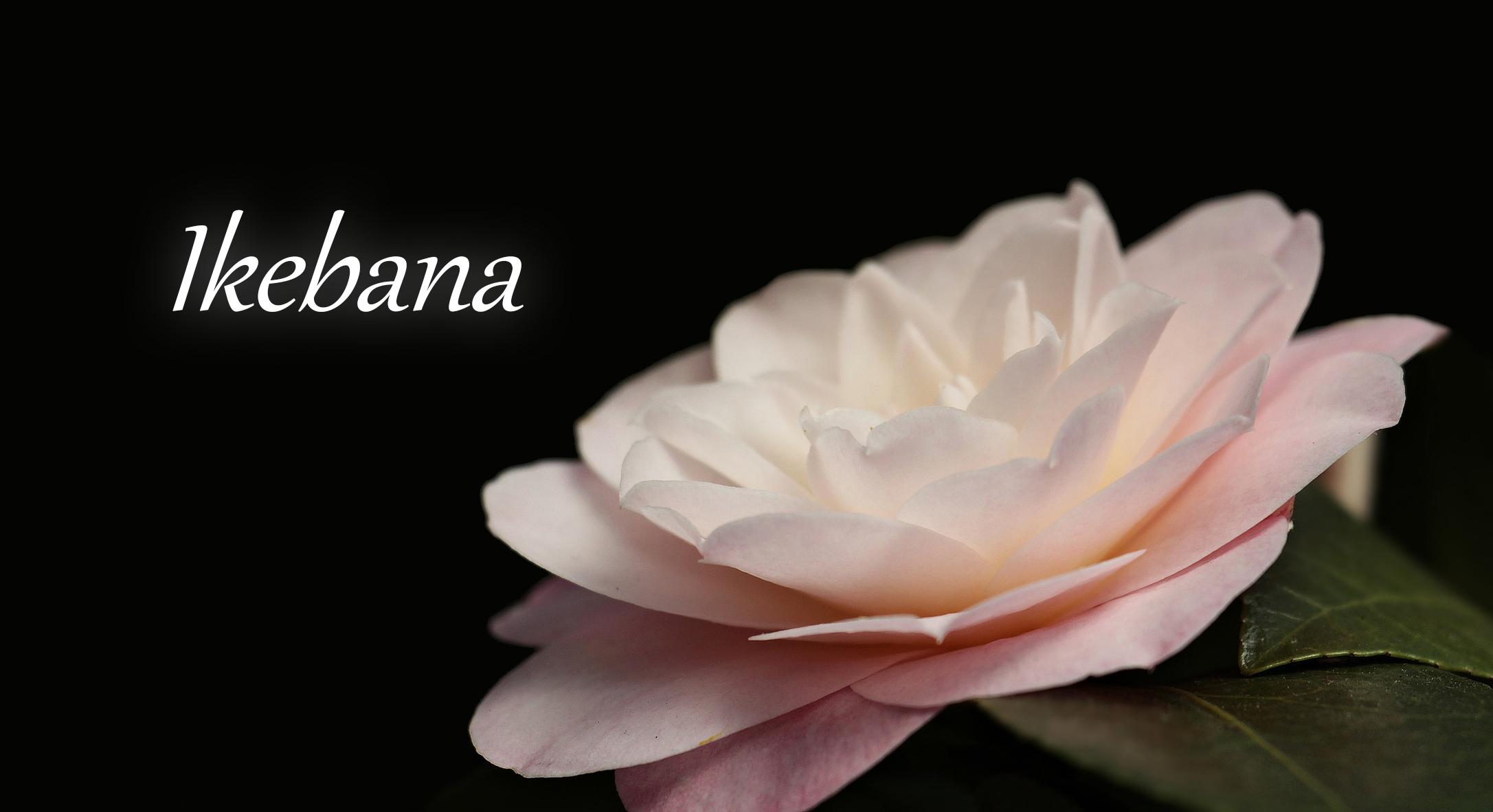 Ikebana – RobStar Week 2021